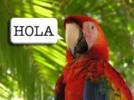 Thumbnail  Learn Spanish  E-book